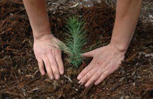 pasjeshouders donatie goeddoel trees for all woodlink samenwerking donation charity duurzaam hout