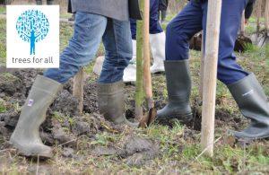 duurzaam hout een beter milieu trees for all planten bomen