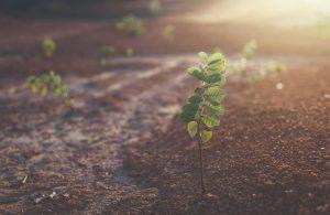 pasjeshouders donatie goeddoel trees for all woodlink samenwerking donation charity