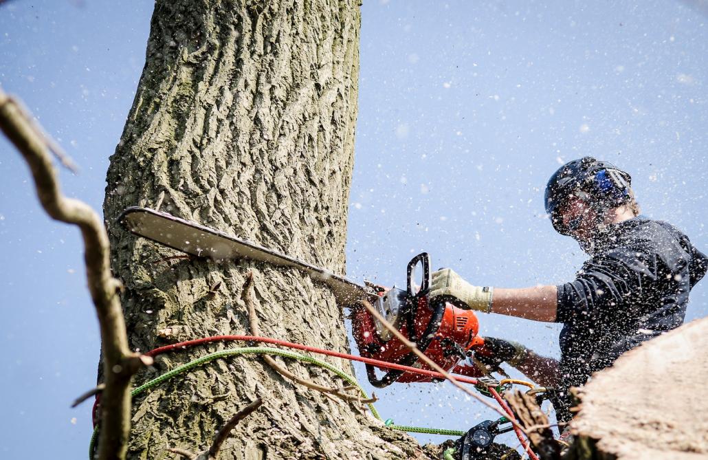 duurzaam hout een beter milieu treetment planten bomen